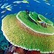 Maldives à la Carte