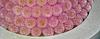 Salomon's Blumen-Inszenierung