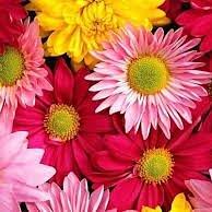 Agra-Fleurs