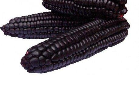 Maïs couleur violette - Pour dessert ou boisson 500g