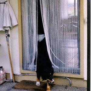 krismar Fliegenvorhang mit Hund