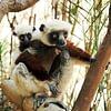 Madagaskar hat eine ausserordentliche Tierwelt und wir wissen wo sie zu finden ist.
