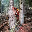 Triage forestier du Vallon