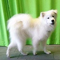 Hundesalon Lucky