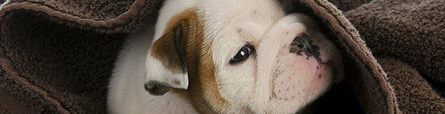 animaldoc AG - Das Gesundheitszentrum für Kleintiere