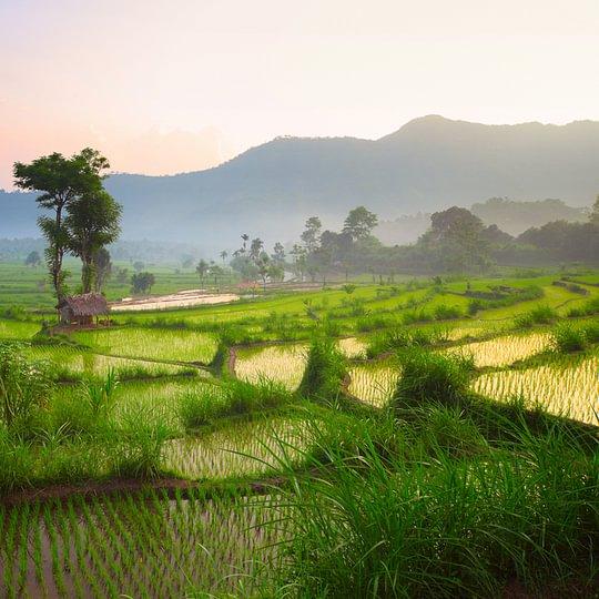 Mystische Reisefelder in Bali