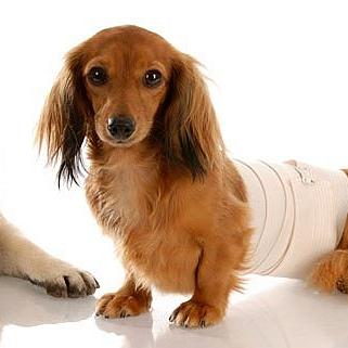 Animal House-Kleintierpraxis