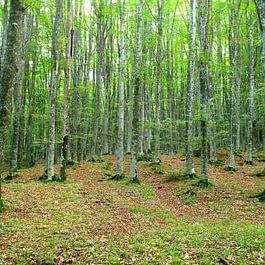 Il verde rigenera mente e spirito