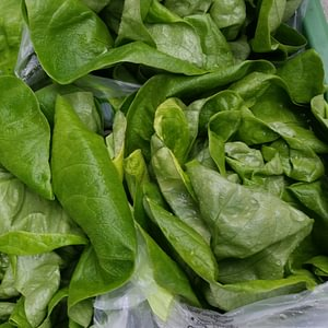 frische Salate,www.saisonbox.ch