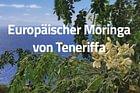 Moringa-Shop Schweiz