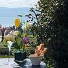 Terrasse jardin