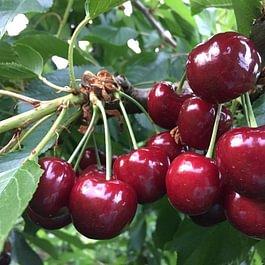 Glauser Obstbau