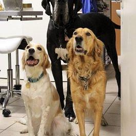 Cabinet Vétérinaire des Sources SA