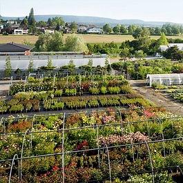 grosse Pflanzenvielfalt