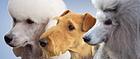 Hundesalon Happyparadise