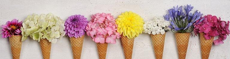 Flower 24 Sarl