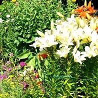 Gartenbau, Gartengestaltung, Gartenunterhalt Kirchdorf