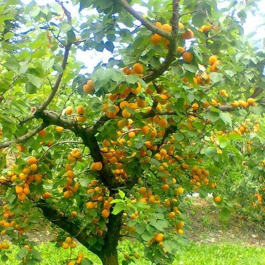Fruitex SA