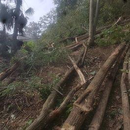 Taglio alberi bianchetto sagl