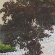 Jardin SA