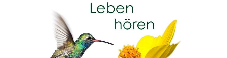 Hörberatung Düdingen / Worb