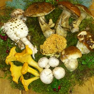 Herbstzeit - Pilzezeit-- Selbst gesucht !!