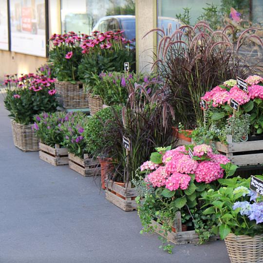 Alfons' Blumenmarkt