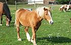 Ponyhof Reuenthal