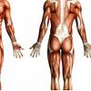 R.C.F.® : Postura e Recupero Post Traumatico