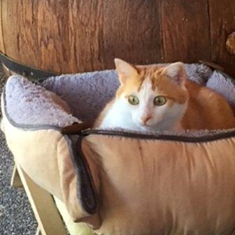 Pour moi c'est un rêve qui se réalise que de pouvoir accueillir vos chats dans ma pension et en prendre soins.