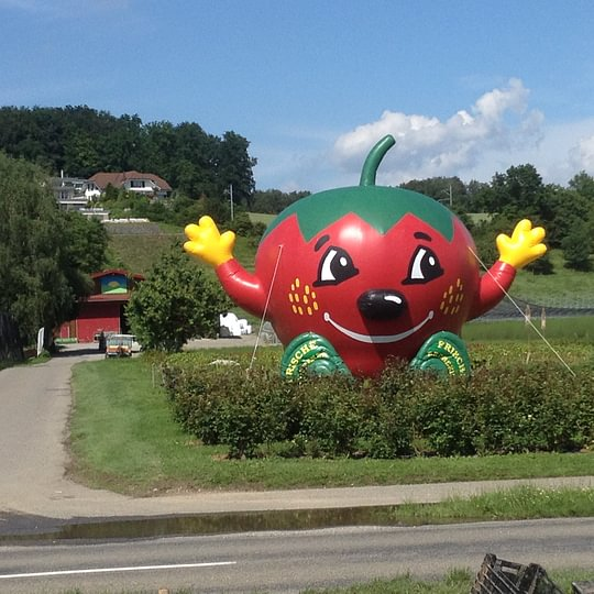 Erdbeeren regional Sonnhaldenhof Aargau