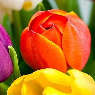 Blumen Grütter