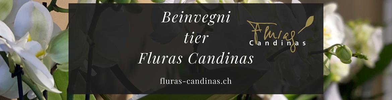 Blumen Candinas / Fluras Candinas