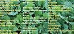 Gemüse und Salat Setzlinge