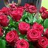 Roses rouges: symbole de l'amour