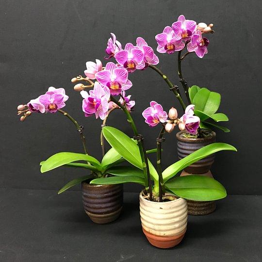 Altstetter Blumen