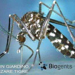 lotta alle zanzare tigre