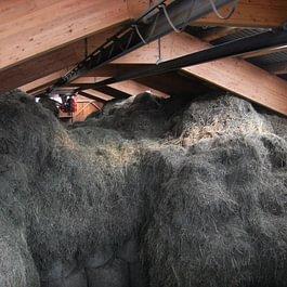 Le foin et le regain récoltés l'été pour nourrir nos vaches l'hiver