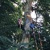 Expertise et diagnostic sanitaire aérien suite à la casse d'une branche