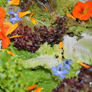 farbenfrohe Salate www.saisonbox.ch