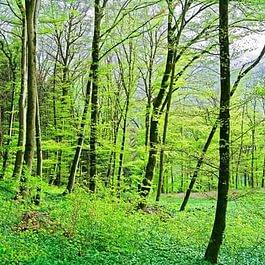 Institut La Forêt de Scissy