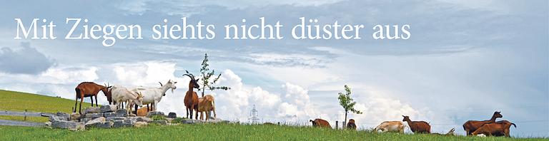 Chèvre de Berne