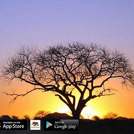Safari App