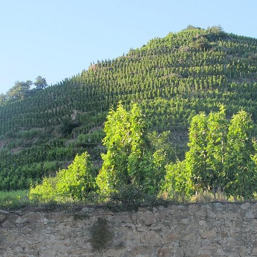 Les vins d'auteurs St. Gallen - Bernard Burgaud