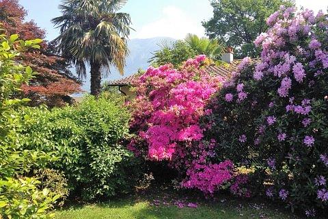Grosse 4.5-Zimmerwohnung mit schönem Garten in Ascona - Casa Cristina