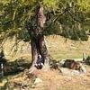 Lavoro con lo spirito degli alberi