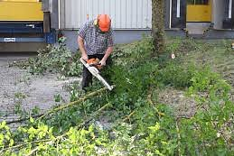 Vegetationspflege