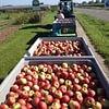 Äpfel vom Sonnhaldenhof Aargau