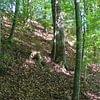 Bestattungsmöglichkeit, Waldfriedhof