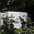 Bonsai-Atelier Rieterpark